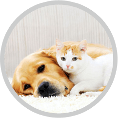 pet stains odor removal