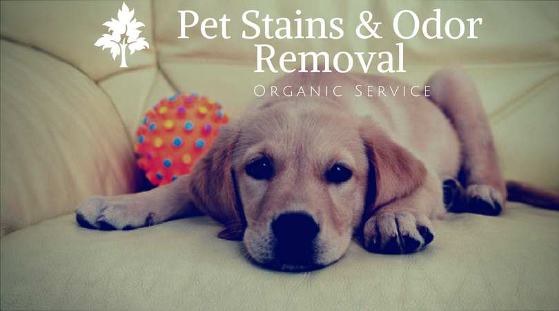 Pet Stains & Odor Removal Service